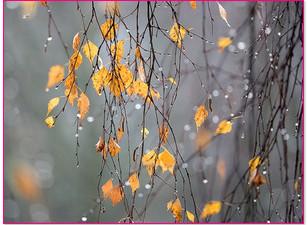 Парфюм для осени, какой он | https://nataliblog.ru