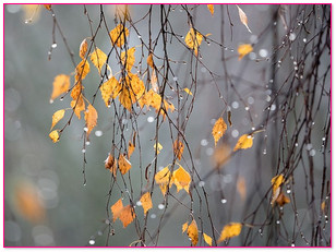 Парфюм для осени, какой он | http://nataliblog.ru